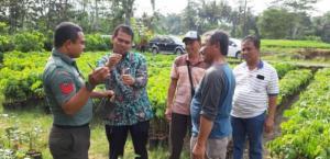 Kementan Dorong Magelang Sentra Pembibitan Sawo Raksasa, Alpukat Kendil dan Klengkeng Kateki